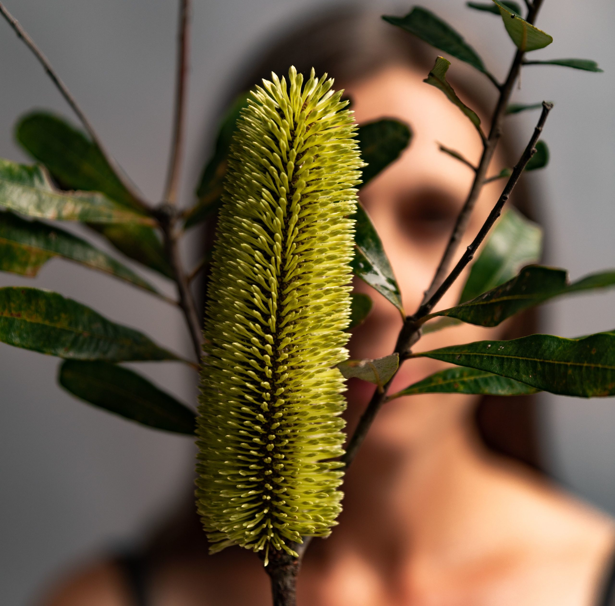 a person just out of focus behind a yellow textured flower