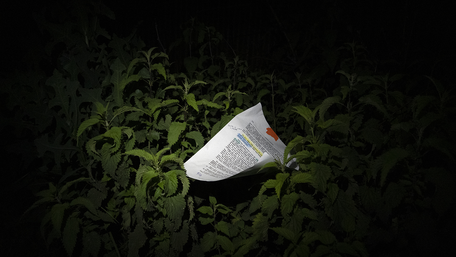 A piece of paper with unredable text printed on it is nestled into a patch of greenery at night