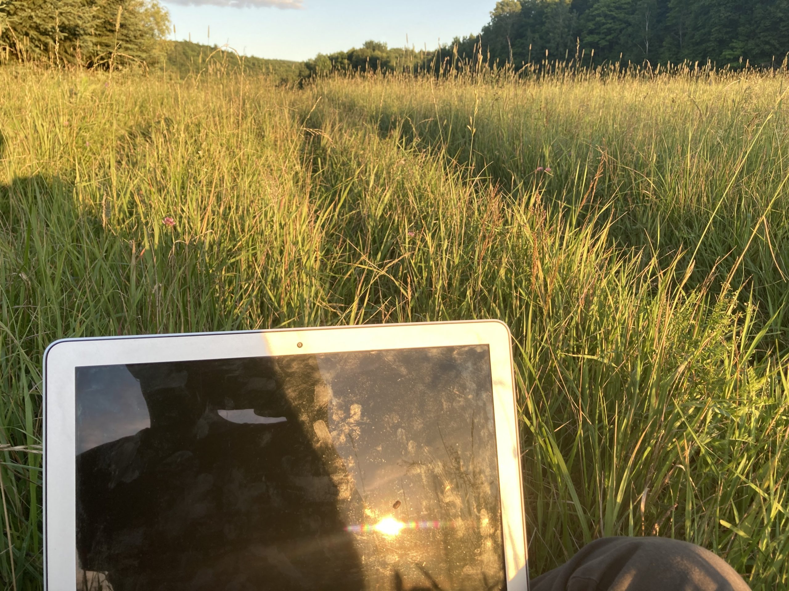 a field of tall grass at dusk with a blank laptop screen in the foreground